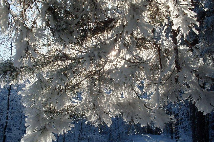 Картинка кружева зимы
